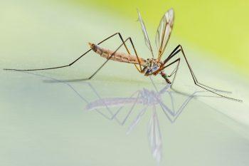 Come disinfestare la casa dalle zanzare