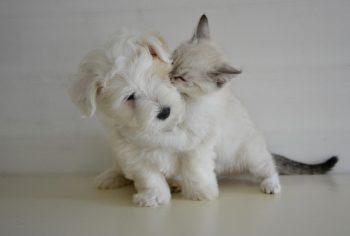 Meglio il cane o il gatto come animale domestico?