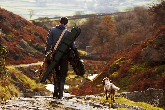 Cani da caccia: quali sono? Caratteristiche