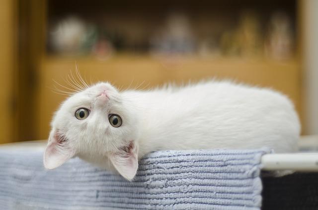 Gatti anallergici: esistono, quali sono?