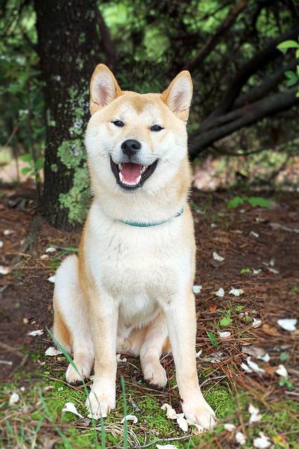 Cani con la lettera A: elenco e descrizioni