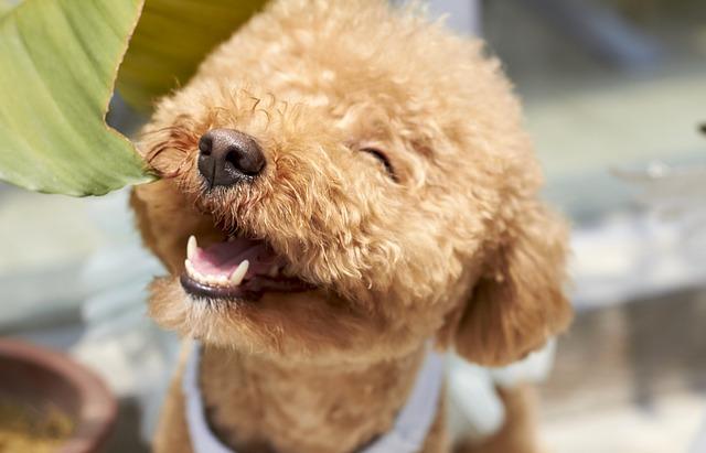 Razze di cani dalla Ba: elenco completo e dettagliato