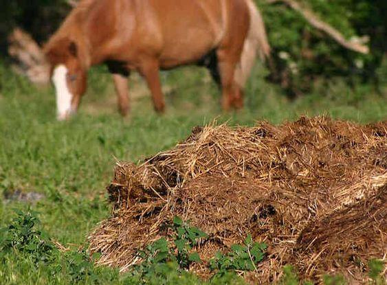 Concime per orto: quale scegliere?