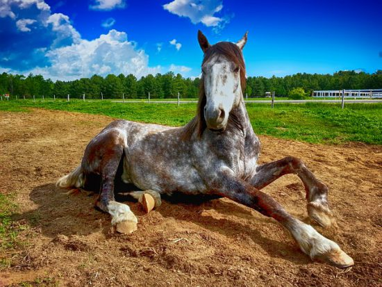 Il linguaggio del corpo del cavallo