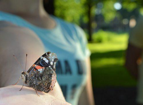 Parchi naturali delle farfalle: dove si trovano, com'è possibile visitarle?