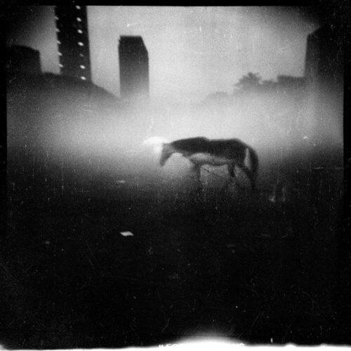 Michael Ackerman: biografia del famoso fotografo